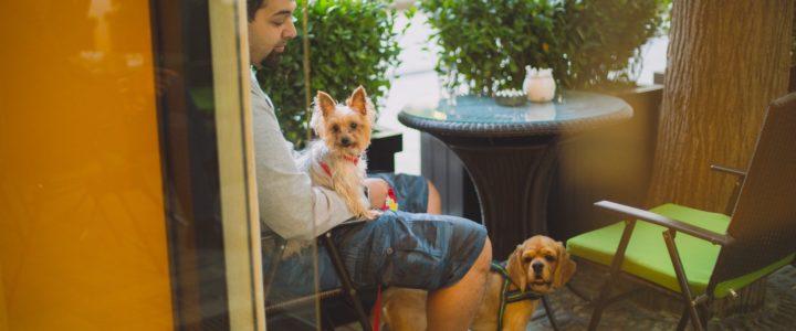 10 Pet-Friendly Restaurants in Metro Manila