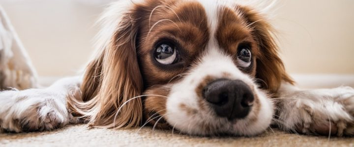 10 Most Popular Dog Breeds in the Philippines